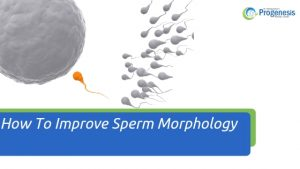 How To Improve Sperm Morphology