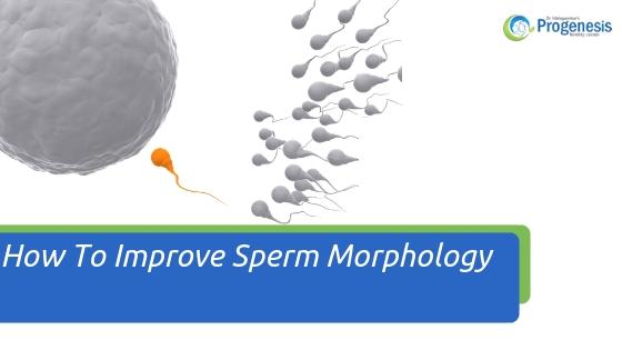How To Improve Sperm Morphology